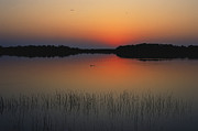 Claudine Laabs and Photo Researchers - Sunrise in the Everglades