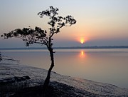 Sun River Prints - Sunrise In The Sunderbans Print by Copyright Wild Vanilla