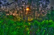 Landscape Related Tags:  Sunset Artwork Prints - Sunrise in the swamp-4 Print by Robert Pearson