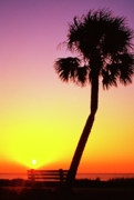 Cabbage Prints - Sunrise Jekyll Island Print by Thomas R Fletcher