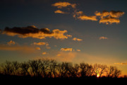 Sunset Greeting Cards Posters - Sunrise Lying Trees Boulder Colorado Photography image Poster by James Bo Insogna