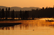 Meadow Willows Posters - Sunrise Near Fishing Bridge in Yellowstone Poster by Bruce Gourley