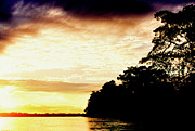Amazonian Rainforest Prints - Sunrise on the Napo River Print by Thomas R Fletcher