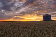Storage Framed Prints - Sunrise Over A Barley Field And Grain Framed Print by Dan Jurak