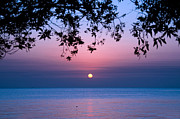 Tree Leaf Photo Prints - Sunrise Over Sea Print by Shahbaz Hussain