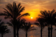 Tropical Sunset Framed Prints - Sunrise over the Red Sea Framed Print by Jane Rix
