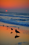 Sunrise Perch Print by Emily Stauring