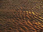 Hunting Island Posters - Sunrise Sand Patterns at Hunting Island Poster by Anna Lisa Yoder