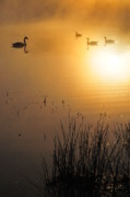 Photogaph Art - Sunrise Swim by Catherine Reusch  Daley