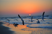 Atlantic Beaches Prints - Sunrise Take Off Print by Emily Stauring