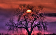 Oak Tree Framed Prints - Sunrise Through The Foggy Tree Framed Print by Scott Mahon