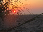 Shane Brumfield Art - Sunrise through the Grass by Shane Brumfield