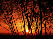 Mounted Prints Framed Prints - Sunrise Through the Trees Framed Print by  Graham Taylor