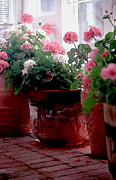 Sunporch Prints - Sunroom with Geraniums Print by Elaine Frink
