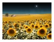 Cortijo Prints - Suns and a Moon Print by Mal Bray