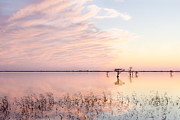 Refuge Prints - Sunset - Pretty in Pink Print by Bill Swindaman