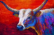 Texas Longhorn Cow Prints - Sunset Ablaze Print by Marion Rose