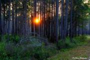 Barbara Bowen - Sunset along the Florida Trail - St.Marks