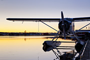 Floats Photos - Sunset and a Beaver by Tim Grams
