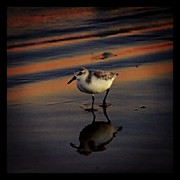 Picoftheday Posters - Sunset And Bird Reflection Poster by James Granberry