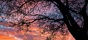 Great Outdoors Photos - Sunset and Branches by Glennis Siverson