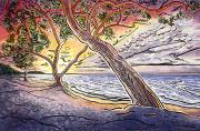 Plants Painting Prints - Sunset at Anaehoomalu Bay Print by Fay Biegun - Printscapes