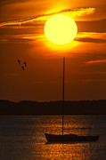 Sports Photos - Sunset At Cape Cod by Susan Candelario