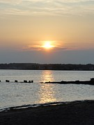 Saybrook Prints - Sunset at Saybrook in May Print by Meandering Photography