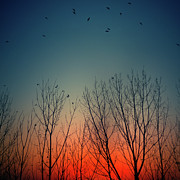 Flying Wild Bird Prints - Sunset Behind Trees Print by Luis Mariano González