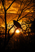 Braches Framed Prints - Sunset Bird Framed Print by Paul White