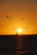 Sunset Birds Key West Print by Susanne Van Hulst