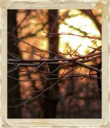 Impact Mixed Media Metal Prints - Sunset Branch Out  Metal Print by Debra     Vatalaro