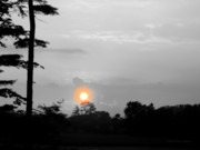 Sun And Tree Prints - Sunset-BW Print by Deborah  Crew-Johnson