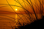 Vegetation Metal Prints - Sunset Metal Print by Carlos Caetano
