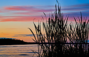 Cattails Framed Prints - Sunset Catails Framed Print by Scott Norris