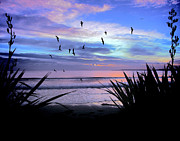 Outlook Photo Posters - Sunset Down Under Poster by Karen Lewis