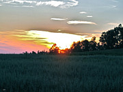 Mesmerizing Sunset Color Metal Prints - Sunset Fields Metal Print by Debra     Vatalaro