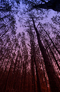 Mac Miller Prints - Sunset Forest Print by M K  Miller