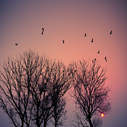 Flock Of Bird Art - Sunset by Gary76973