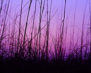 Wildlife Sunset Posters - Sunset Grasses Poster by Al Powell Photography USA