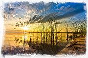 Florida Rivers Photo Prints - Sunset Grasses Print by Debra and Dave Vanderlaan