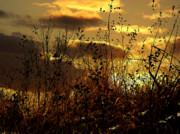 Yellow Prairie Photos - Sunset Grasses by Julie Hamilton
