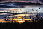 Sunset Grasses Print by Sandra Cockayne