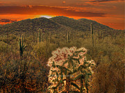 Saguaros Posters - Sunset in the desert Poster by Jim Wright