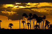 Florida Swamp Photos - Sunset in the refuge by Richard Mann