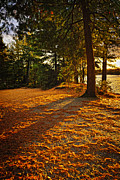 Fall Trees Posters - Sunset in woods at lake shore Poster by Elena Elisseeva