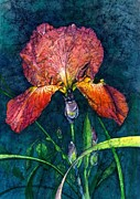 Water Color Paintings - Sunset Iris by Barbara Jewell