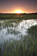 Charleston Sunset Posters - Sunset Marsh Grass Poster by Dustin K Ryan