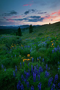 Hillside Posters - Sunset Meadow Trail Poster by Mike  Dawson