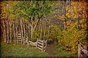 Split Rail Fence Prints - Sunset on an Autumn Wood Print by Christine Annas